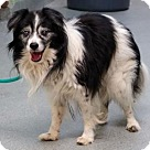 Adopt A Pet :: Lydia/Perry