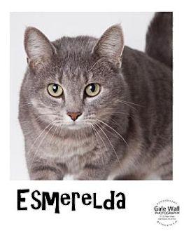 Domestic Shorthair Cat for adoption in Hutchinson, Kansas - Esmeralda
