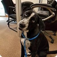 Adopt A Pet :: Jitters - San Antonio, TX