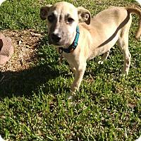 Adopt A Pet :: Tonka - LAKEWOOD, CA