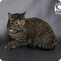 Domestic Shorthair Cat for adoption in Tomball, Texas - Ruby