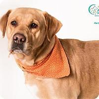 Adopt A Pet :: RUBY TUESDAY - Camarillo, CA