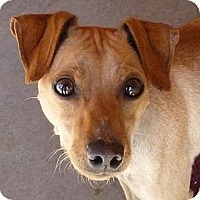 Adopt A Pet :: Auggie - Las Cruces, NM