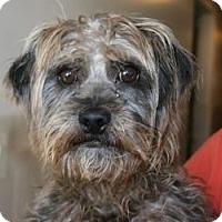 Adopt A Pet :: Rupert - Canoga Park, CA