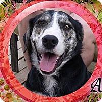 Adopt A Pet :: Ana - Hancock, MI
