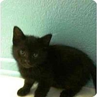 Adopt A Pet :: Inky - Irvine, CA