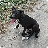 Adopt A Pet :: Sally - Ormond Beach, FL