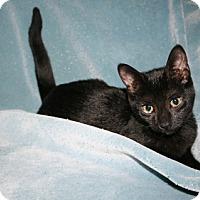 Adopt A Pet :: Orion - Alexandria, VA