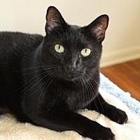 Adopt A Pet :: Ozzie - Miami, FL