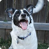 Adopt A Pet :: Tessa - Parker, CO