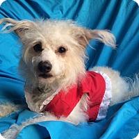 Adopt A Pet :: MADDIE - Irvine, CA