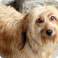 Adopt A Pet :: Tina Louise - Norwalk, CT