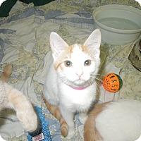 Adopt A Pet :: Emma - Medina, OH