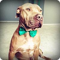 Adopt A Pet :: Bronson - Medora, IN