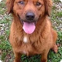 Adopt A Pet :: Jules - Salem, NH