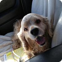 Adopt A Pet :: Dudley - Alpharetta, GA