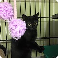 Adopt A Pet :: Jeannie - Island Park, NY