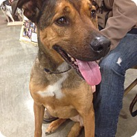 Adopt A Pet :: Shelby - Bellingham, WA