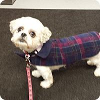 Adopt A Pet :: Jemma - Schofield, WI