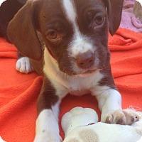 Adopt A Pet :: Maisie (ARSG) - Santa Ana, CA
