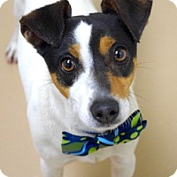 Adopt A Pet :: Coco - Dublin, CA