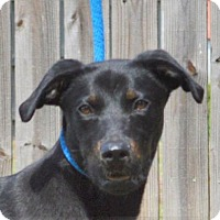 Adopt A Pet :: **DONALD** MEET AUG 27TH! - Mukwonago, WI