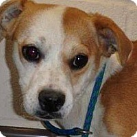 Adopt A Pet :: Peanut - Las Vegas, NV