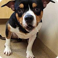 Adopt A Pet :: Rue - Oswego, IL
