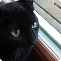 Adopt A Pet :: Beau - Cincinnati, OH