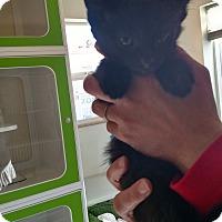 Adopt A Pet :: Rafa - Divide, CO