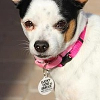 Adopt A Pet :: Bowser - Scottsdale, AZ