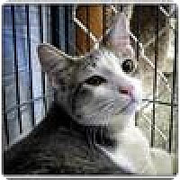 Adopt A Pet :: Sprout - Freeport, NY