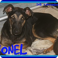 German Shepherd Dog Mix Dog for adoption in Jersey City, New Jersey - LIONEL