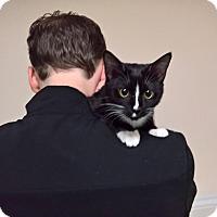 Adopt A Pet :: TESS - Raleigh, NC