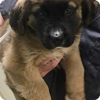 Adopt A Pet :: I'M ADOPTED Sammi Henderson - Oswego, IL