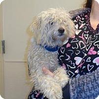 Adopt A Pet :: Roddy - Wildomar, CA