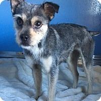 Adopt A Pet :: Tansy - Sparta, NJ