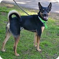 Adopt A Pet :: Ranger - Athens, GA