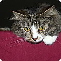 Adopt A Pet :: Qunioa - North Branford, CT