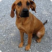 Adopt A Pet :: Lucia - Gadsden, AL