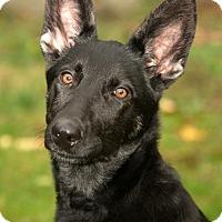 Adopt A Pet :: Greta - Wayland, MA