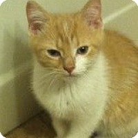Adopt A Pet :: Evan - Riverside, RI