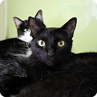 Adopt A Pet :: Busta Move - Chicago, IL