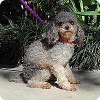Adopt A Pet :: Cherie - Daleville, AL