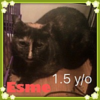 Adopt A Pet :: Esme - Brentwood, NY