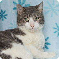 Adopt A Pet :: Precious - Elmwood Park, NJ