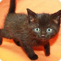 Adopt A Pet :: Kanga - Sparta, NJ