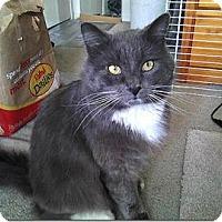 Adopt A Pet :: Sebastian - El Dorado Hills, CA