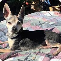 Adopt A Pet :: Mookie - Buffalo, NY