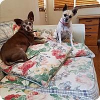 Adopt A Pet :: Nacho - Monrovia, CA